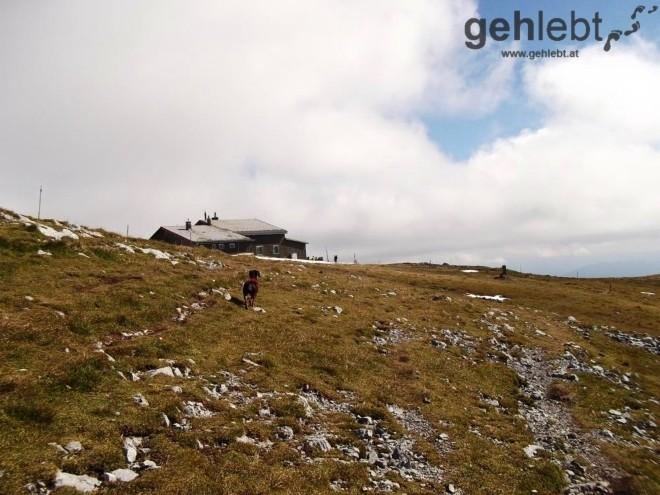 Hundewanderung auf den Schneeberg