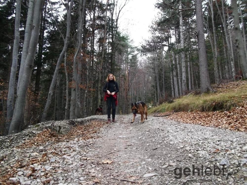 Herbstwanderung Kieneck - Forststraße Richtung Matrassteig