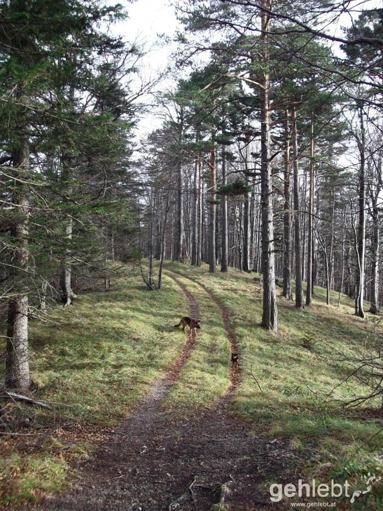 Herbstwanderung Kieneck - Abstieg am Enziansteig