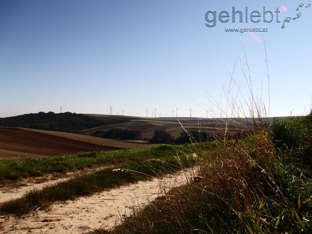 Das Weinviertel zeigt sich von seiner Windkraft-Seite.