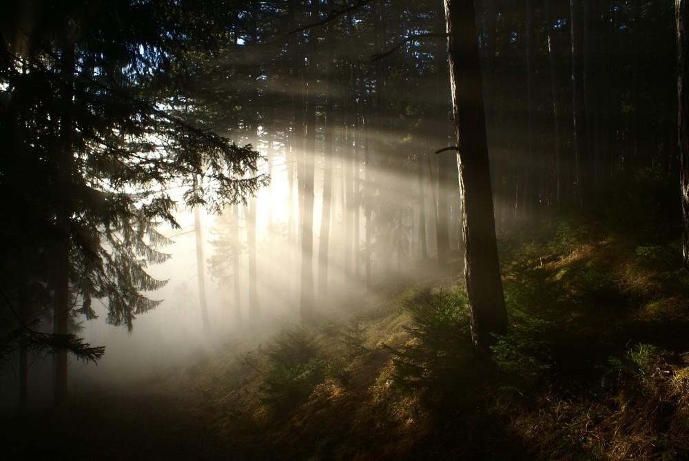 Herbstliche Nebelstimmung am Abstieg nach Gloggnitz.