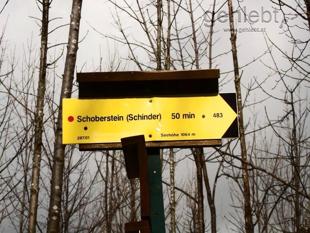 Wer den Schinder scheut, kann auch an der Forststraße hinauf marschieren.