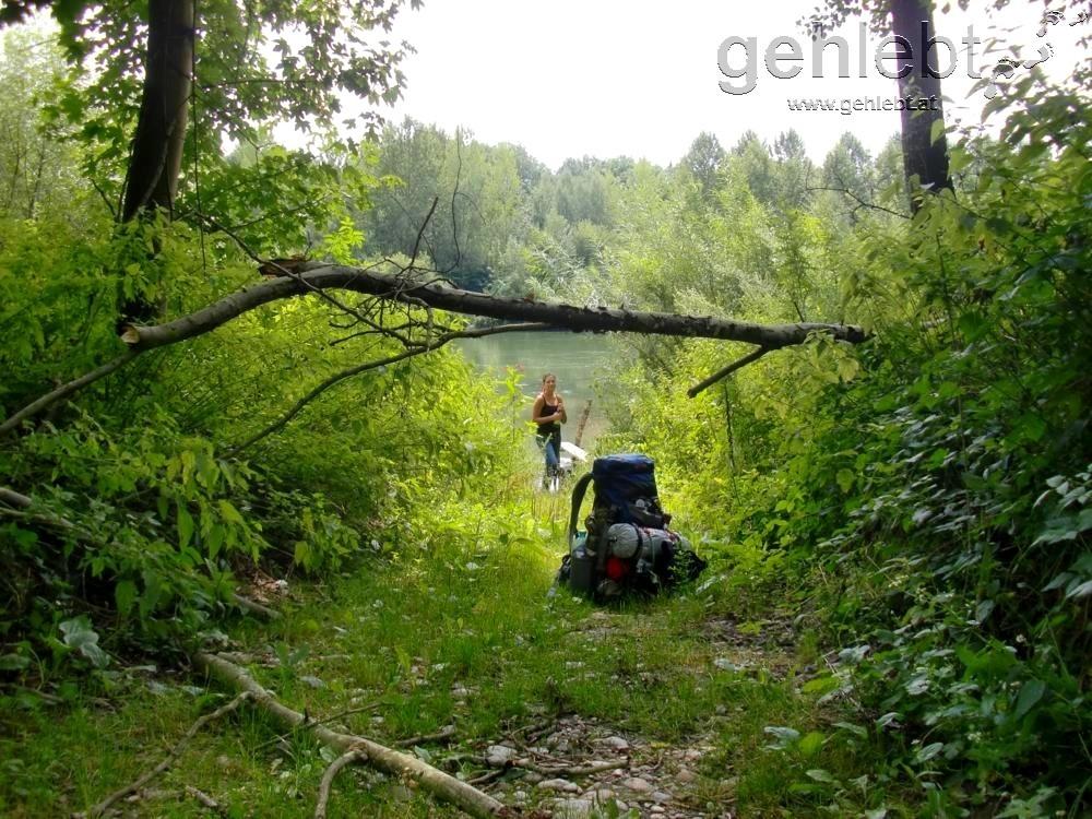 irgendwo in den Tiefen des Waldes