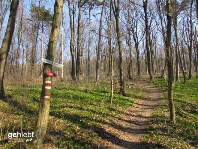 beethoven-wanderweg-40-16