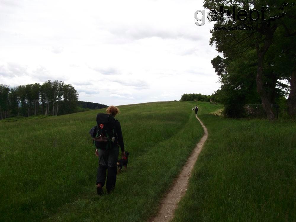 Trampelpfad zwischen Rotem Kreuz und Sophienalpe.