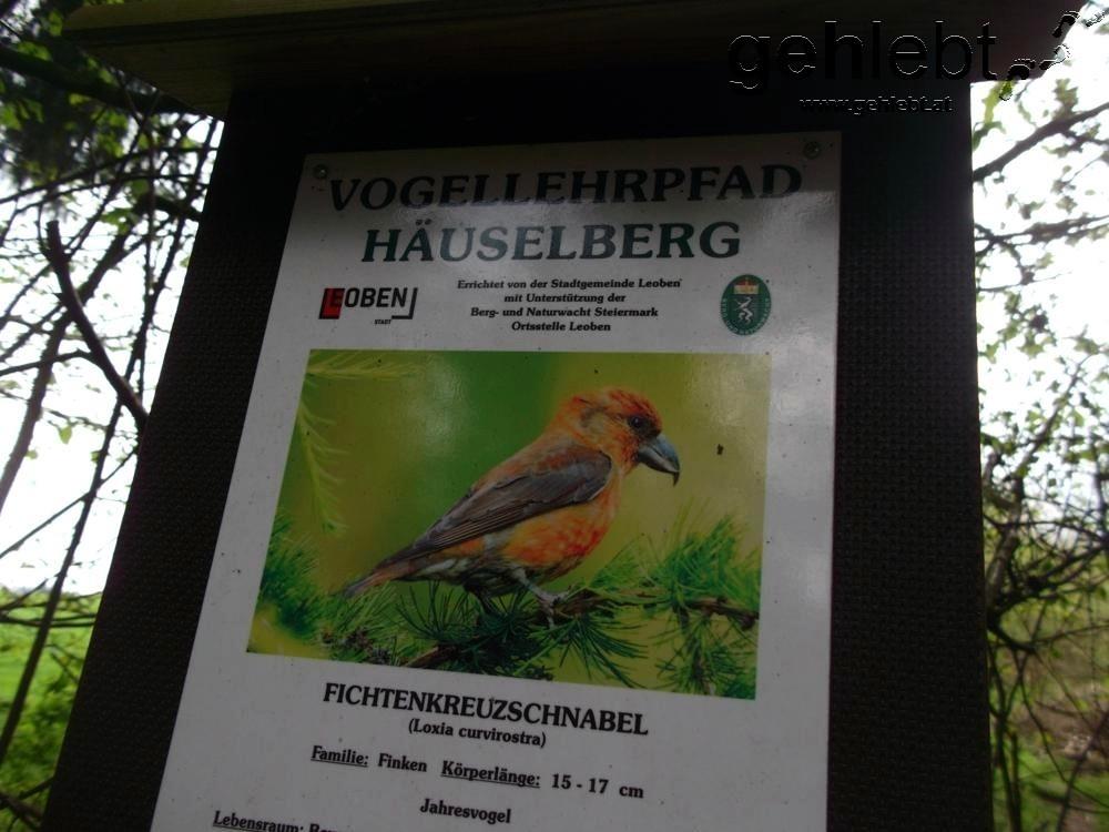 Zwölf Stationen informieren über Vögel, die am Häuselberg gesichtet werden können.