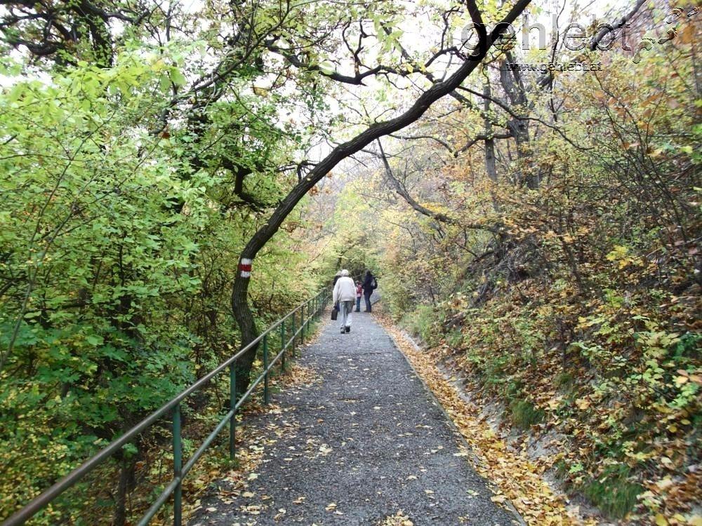Am Nasenweg steil hinauf zum Leopoldsberg.