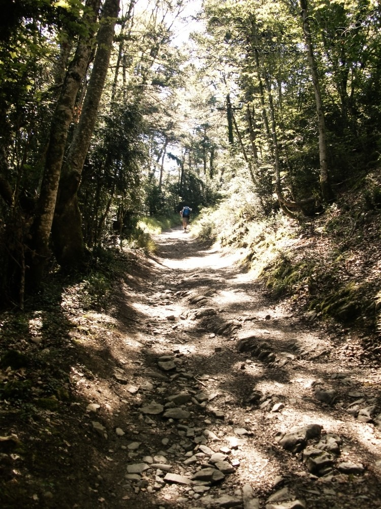 Schattige Waldwege als willkommene Erholung