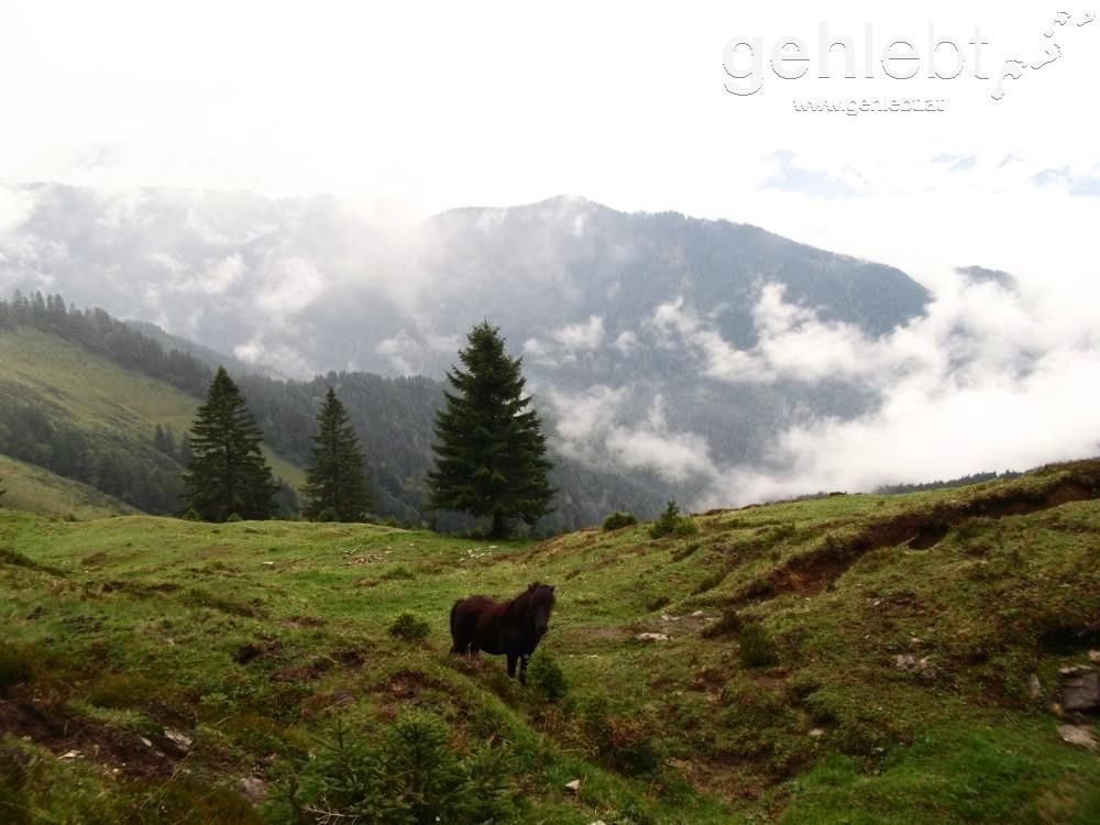 Bregenzerwald Weidenlandschaft