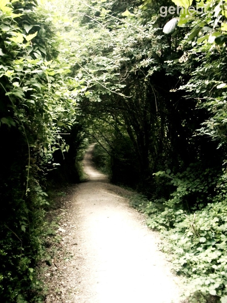 Camino - Tag 3: Waldwege zu Beginn