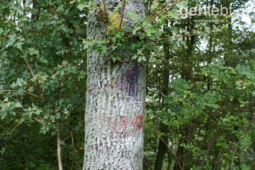 Noch sichtbare Markierung des 11ers bei der Hohen Wand Wiese - RUW 11.