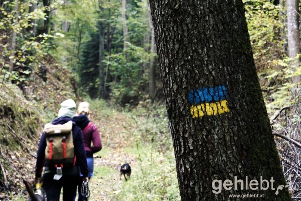 Am Weg zur Alm wandert man am Niederösterreichischen Landesrundwanderweg.