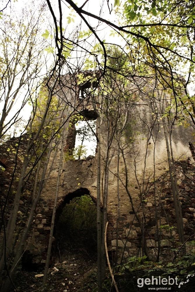Bäume und Sträucher finden Platz in den alten Gemäuern.