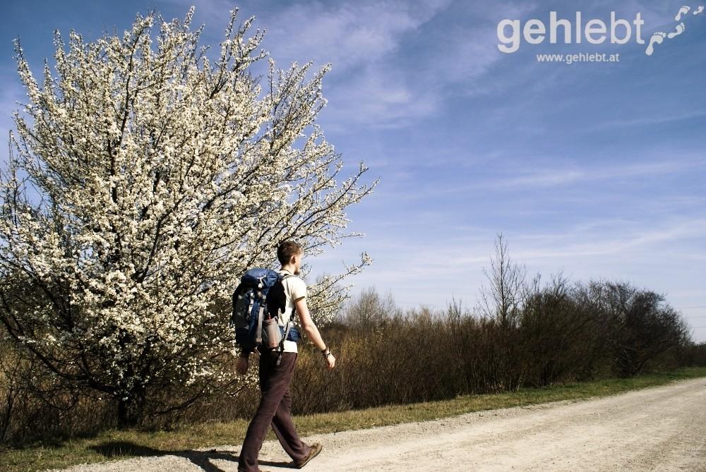 Frühling am Marchfeldkanal - RUW 11.