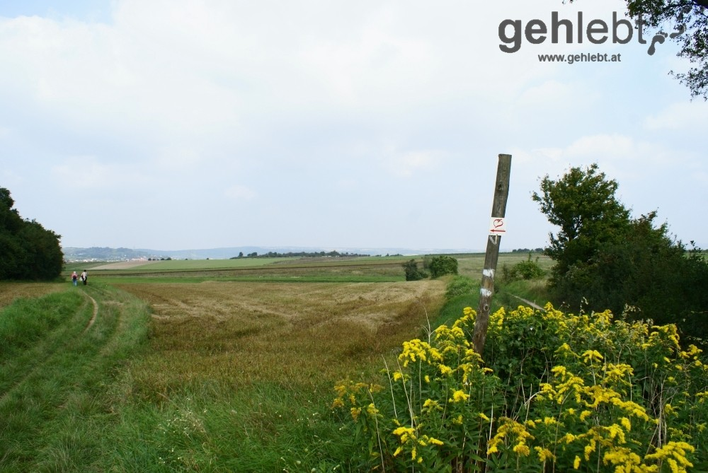 Interessante Naturlandschaft am Herrenholz - RUW 10.