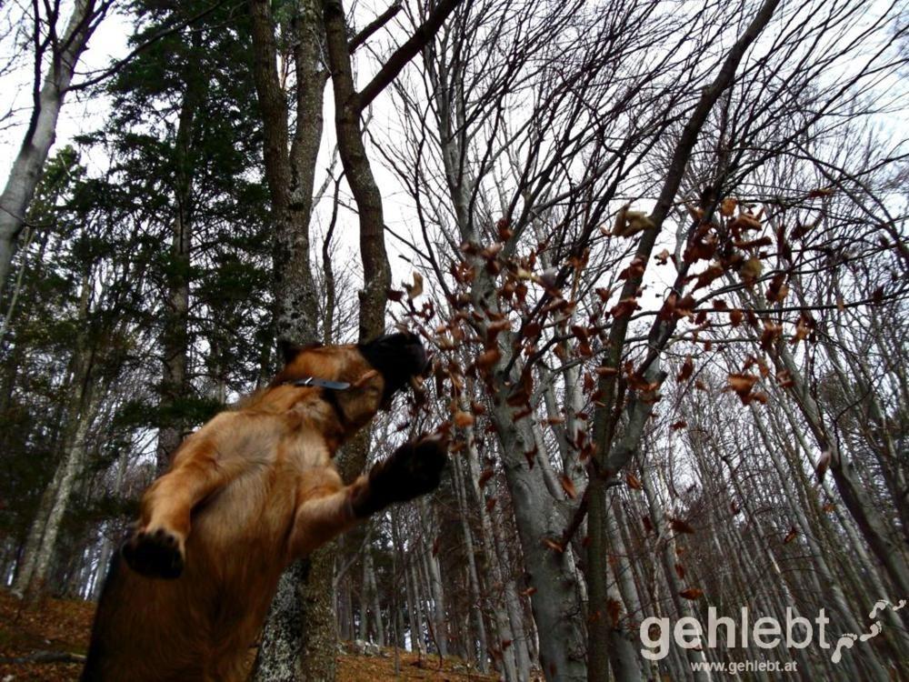 Auch für Hunde ist das Laub eine Spielfreude.