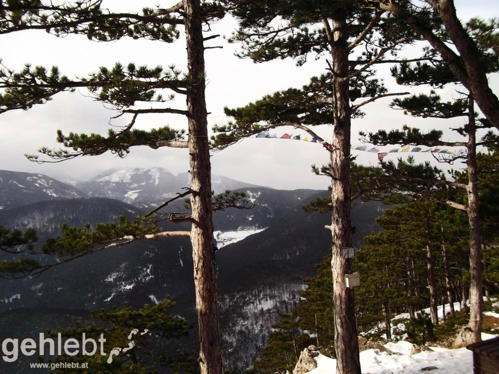 Gösing und Flatzer Wand - Blick vom Gösing auf den Schneeberg