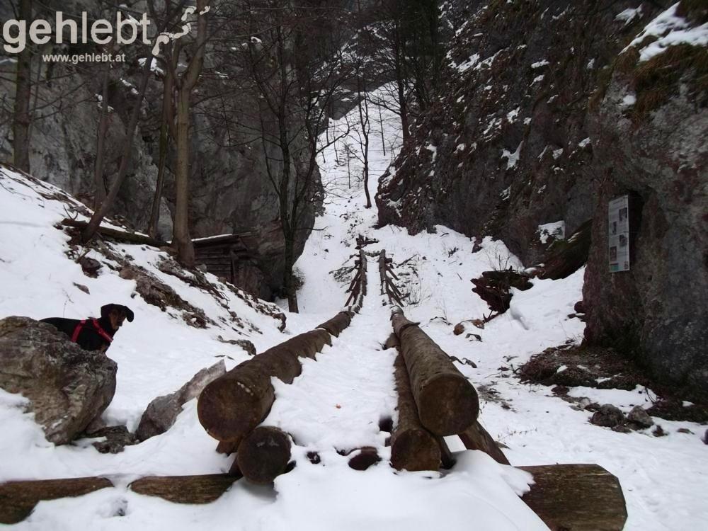 Winterwanderung Naturfreundehaus Knofeleben - Holzriese in der Eng-Schlucht