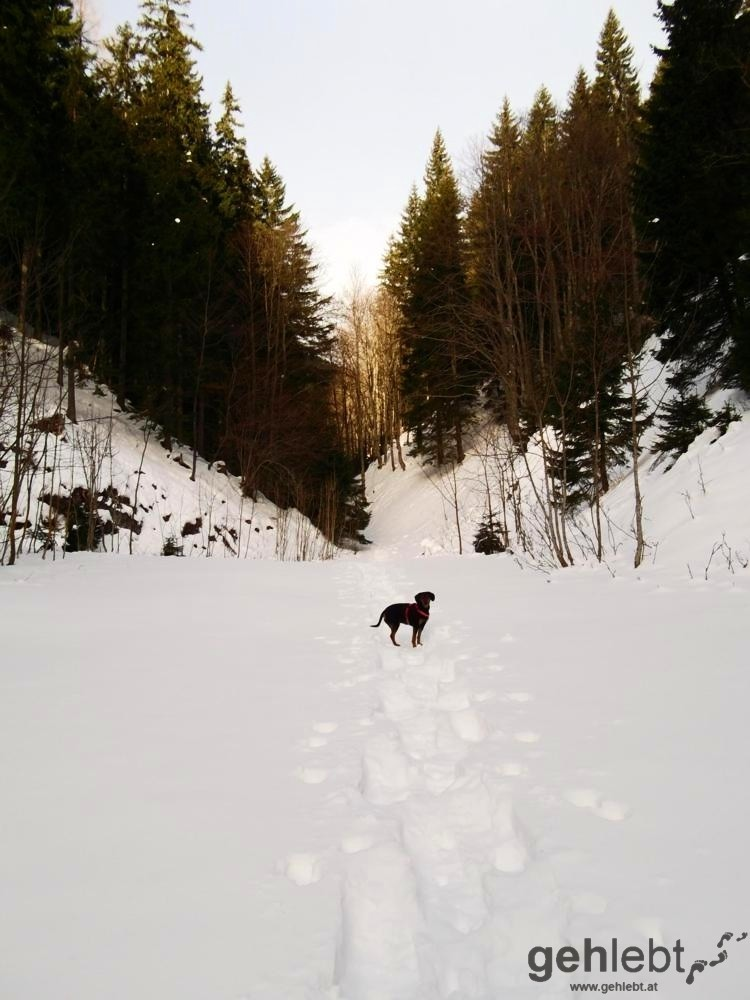Winterwanderung Naturfreundehaus Knofeleben - Sonnenstrahlen kommen durch die Schlucht