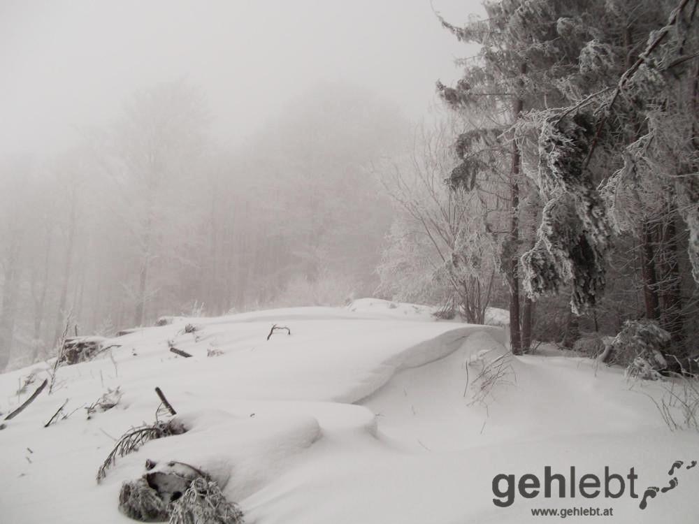 Hirschwaldstein - Schnee über Schnee