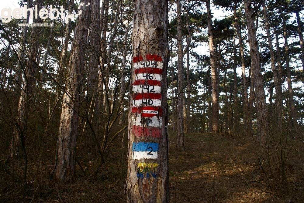 Bald werden alle Bäume im Föhrenwald bunt sein,