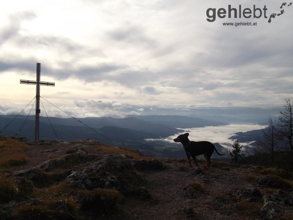 Flatterndes Ohr mit Gipfelkreuz und Blick in das Mürztal.