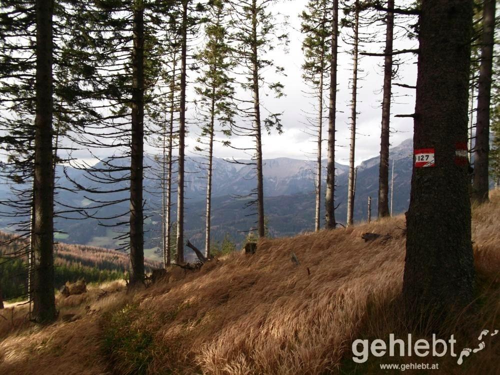 Der gut beschilderte Weg Nr. 827 führt uns aus dem Wald.