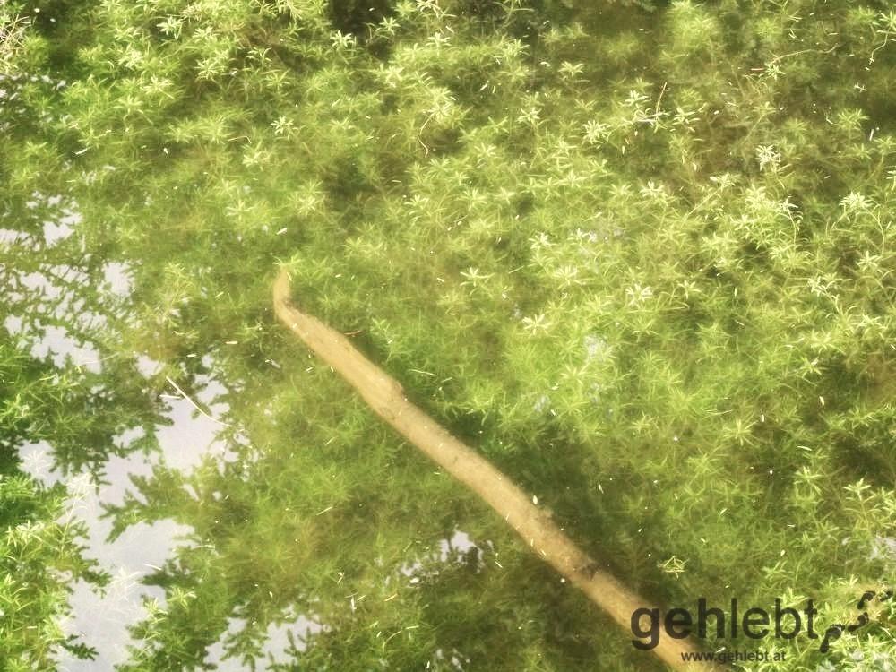 Grüner Teich...macht dem schönsten Platz Österreichs Konkurrenz.
