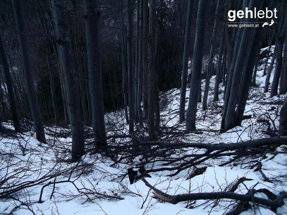 Der Eisregen der letzten Wochen hat auch hier seine Spuren hinterlassen.