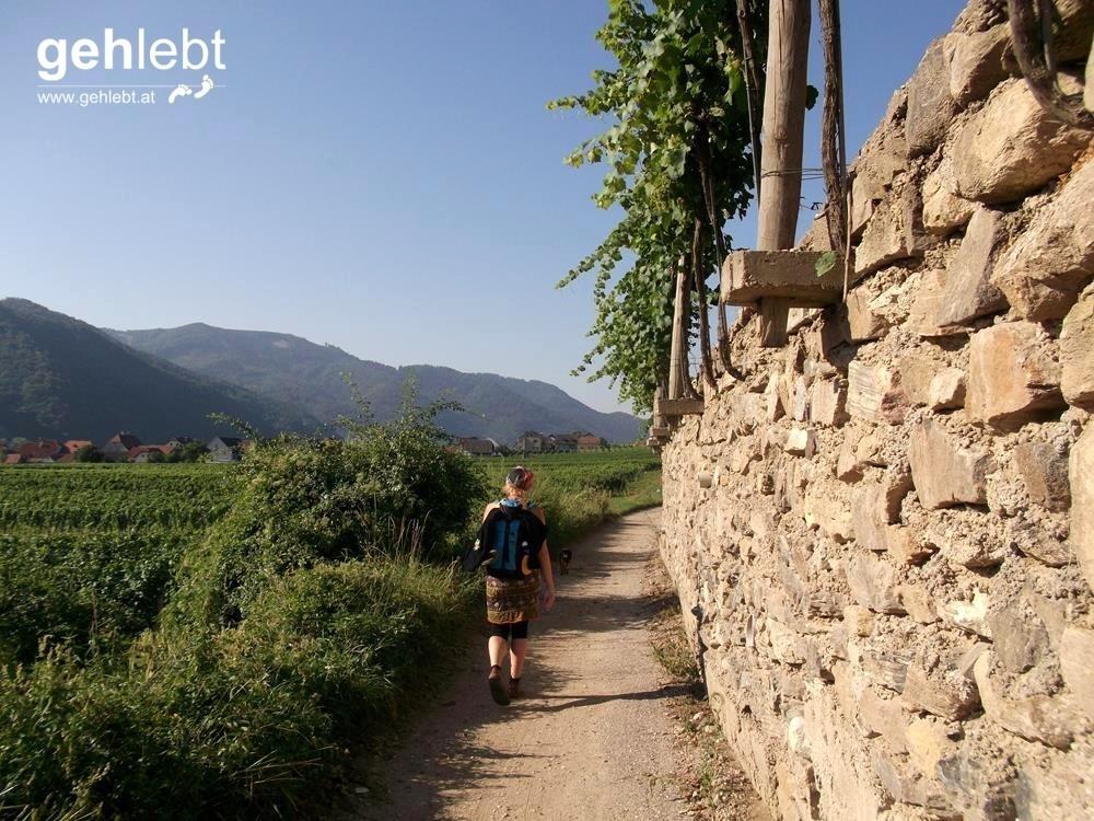 Zwischen Weißenkirchen und St. Michael sind Weinreben die ständigen Begleiter.
