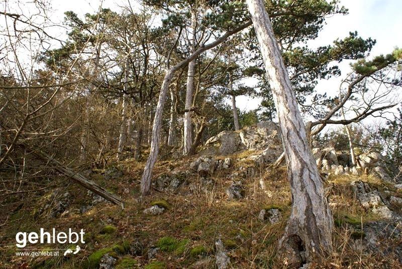 Steiniger Rundweg in den Fischauer Vorbergen