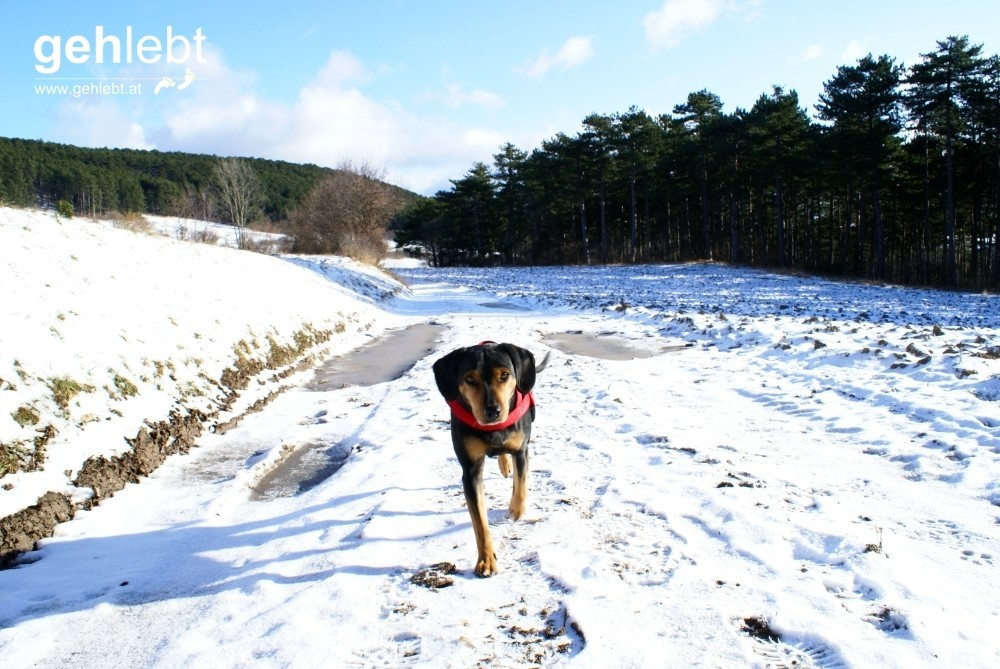 Rundweg Sierningtal - Warme Lucke & Gfieder