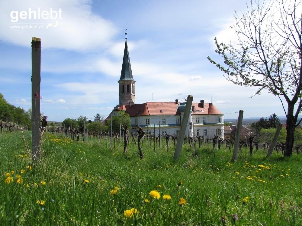 Im Frühling blüht es auf den Wiesen, während an den Weinstöcken gerade mal die ersten Blätter rauskommen.