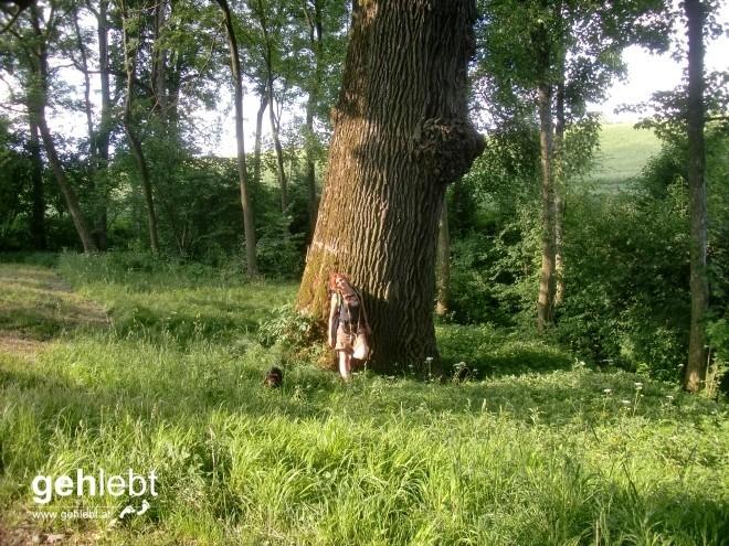 Fünf Kilometer vor dem Ende treffen wir auf diesen Baum, der mir bislang noch nie aufgefallen ist. Ist ja auch leicht zu übersehen.