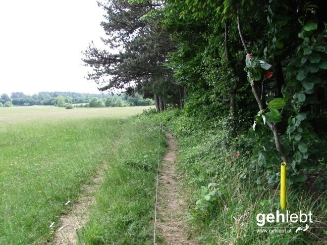 Am Weg zum Zitherwirt wird den Wandersmenschen wenig Platz am Weg gelassen.
