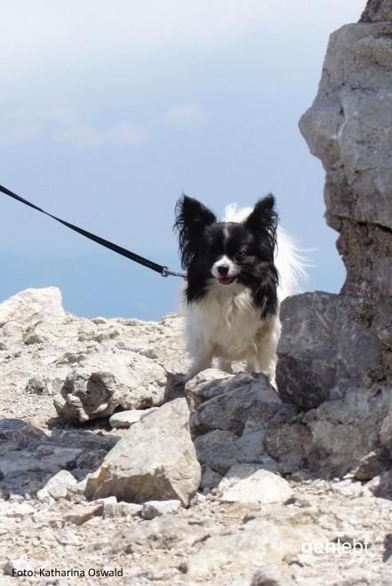 Vierbeinige Gipfelstürmer lassen sich den Schneeberg auch nicht entgehen. (c)Foto: Katharina Oswald