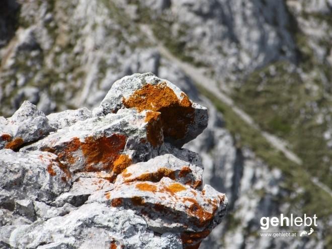 Ein Foto aus dem Felsen- und Flechtenalbum, wie aus dem FF.