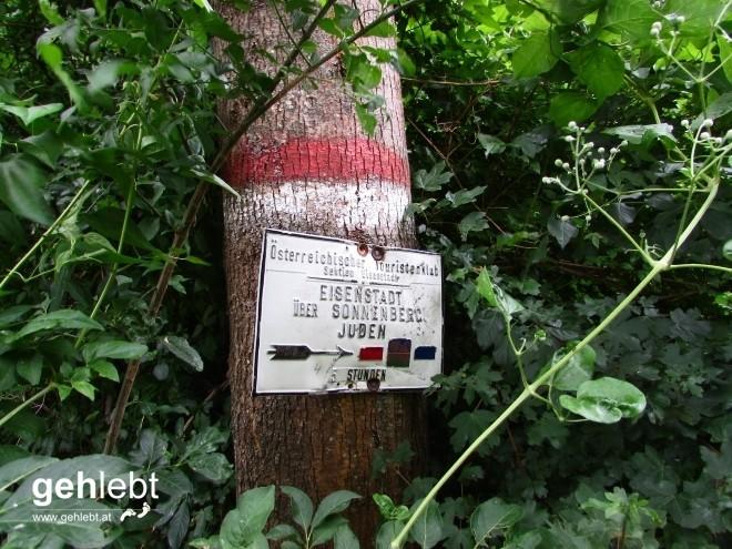 Rot markiert führt der stetig ansteigende Waldweg zum Sonnenberg.