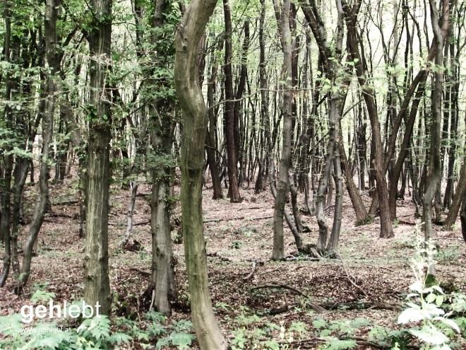 Baumreich im Waldreich.