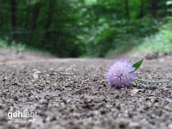 Auch auf einsamen Forststraßen findet man Schönes.