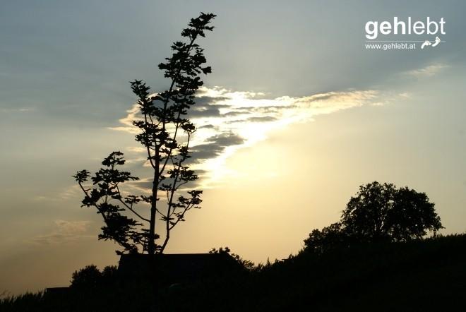 Die untergehende Sonne zeigt uns den Weg zum Buschenschank.