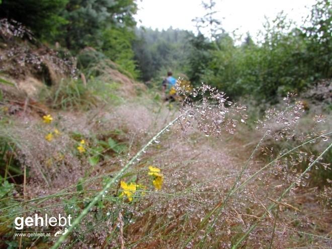 Der Vormittagsregen hatte am Weg nach St. Nikola seine Spuren hinterlassen.