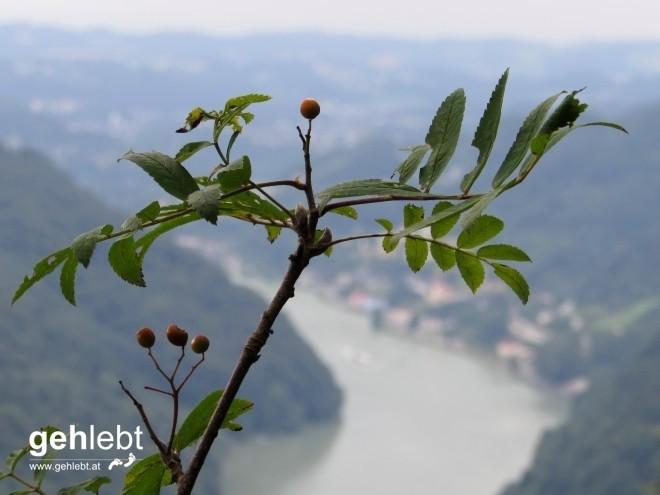 Am Predigtstuhl mit Blick auf das Donautal.