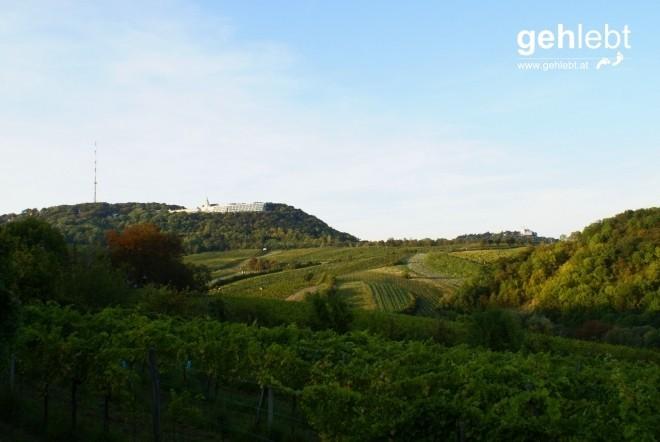 Der Kahlenberg strahlt über den Weinbergern hervor.