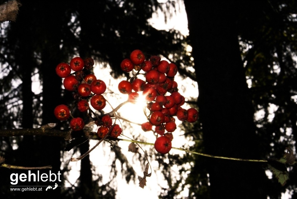 Im Wald der Kindheit
