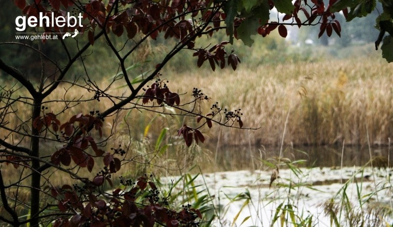 Der Herbst - die Jahreszeit der Kontraste.