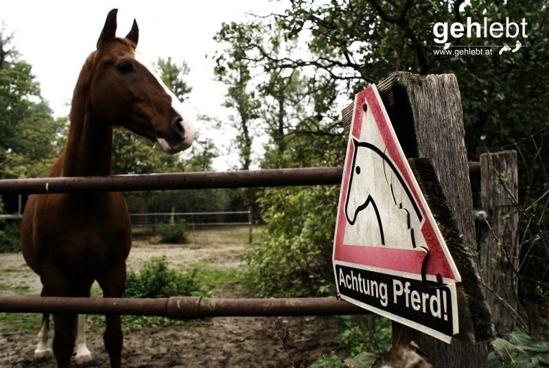 Ich frage mich, ob hier an die Gefühle des Pferdes überhaupt nur ansatzweise gedacht wurde?