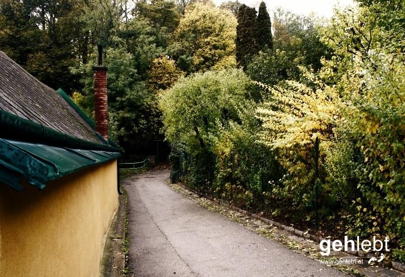 Döblinger Wiener Weinwandertag-GeherInnen kennen diese 20 Meter Wegstrecke.