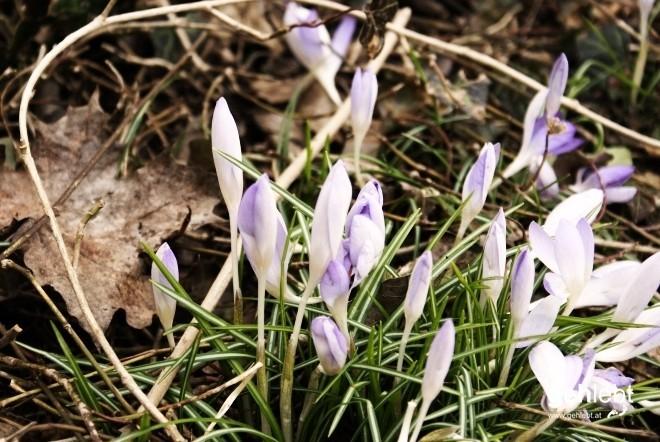 Der Frühling versteckt sich.