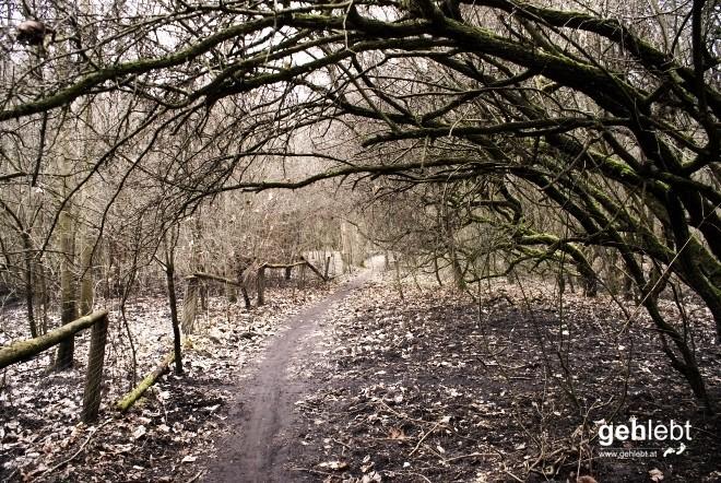 Knusper, Knusper, der verwunschene Wald lädt mich zum Weitermarsch ein.